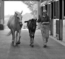 Back to the Barn  by Laura  Donnell