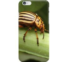 Special Insect iPhone Case/Skin