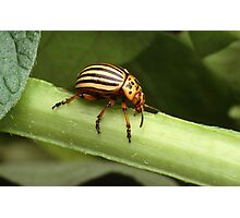 Special Insect Photographic Print