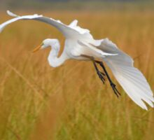 Ardea Alba - Great White Egret | Hampton Bays, New York Sticker