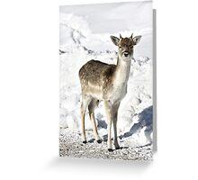 Beginner Antlers Greeting Card