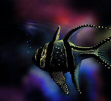 Banggai cardinalfish by LudaNayvelt