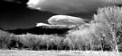 Trees Beneath a Cloud by Corri Gryting Gutzman