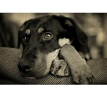 pensive Photographic Print