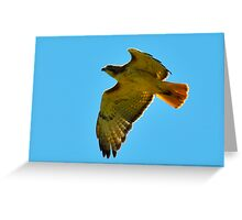 Flying High - Red Tail Hawk Greeting Card