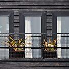 three windows by richard  webb