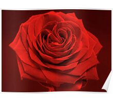 Red rose in red monochrome Poster