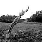 Tree Stump, Phoenix Park, Dublin by Dave  Kennedy
