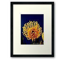 Protea Bloom Framed Print