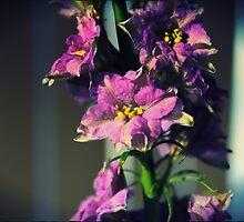 DELPHINIUM by sweetrose