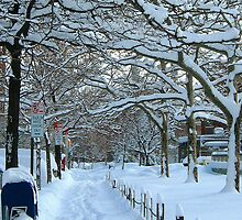 Snow in Bronx, New York City  by Alberto  DeJesus