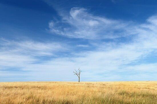 A Lone Tree by Rod Kashubin
