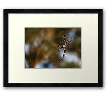 Golden Silk Orb-Weaver Framed Print