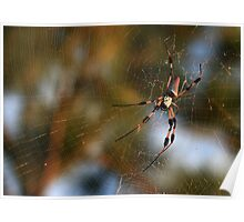 Golden Silk Orb-Weaver Poster
