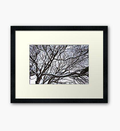 Lace Leaf Maple Framed Print