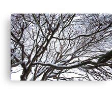 Lace Leaf Maple Canvas Print