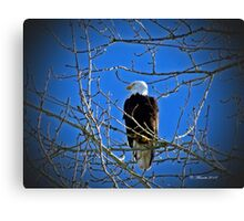 Perched upon a tree Canvas Print