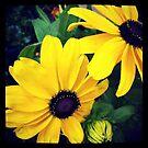 Summer Daisies by Marita
