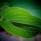Textured Leaf - Patterns of Nature by Marilyn Harris