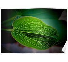 Textured Leaf - Patterns of Nature Poster
