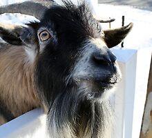 Goat by Rebekah  Byland