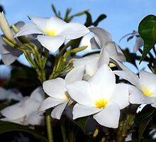 White Plumeria by ♥⊱ B. Randi Bailey