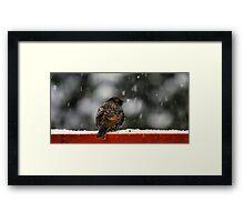 Snowy Starling Framed Print