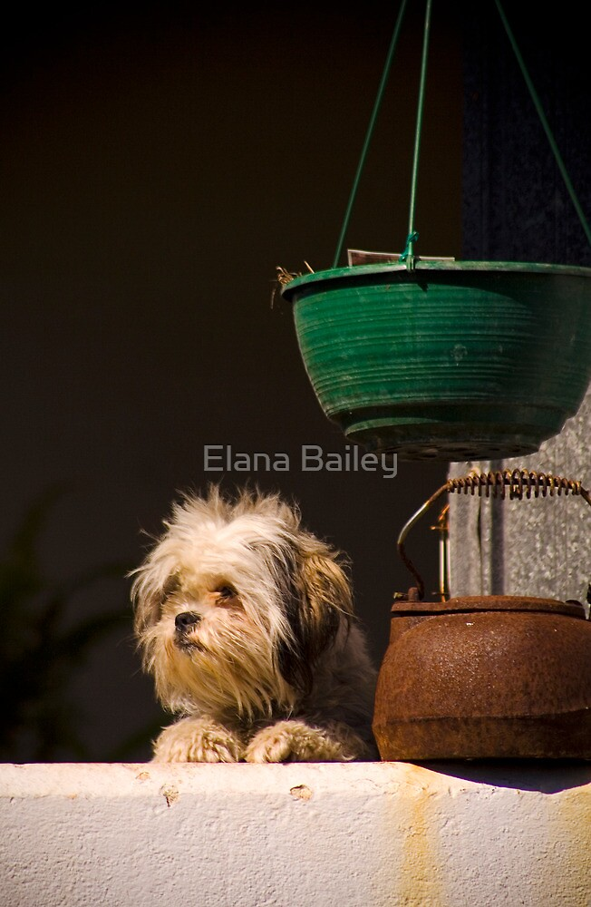 Who's there? by Elana Bailey