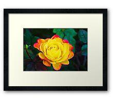 California Rose 8 Framed Print