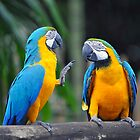 Blue & Yellow Macaws - Singapore (4) by Ralph de Zilva