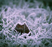Jack Frost's Jewels, Emberton, Buckinghamshire by strangelight