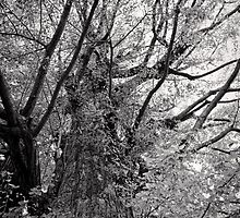 Tree of time - Japan by Norman Repacholi