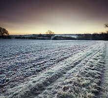 Jack's Field by Andy Freer