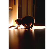 Cats Dance in Sunlight Photographic Print
