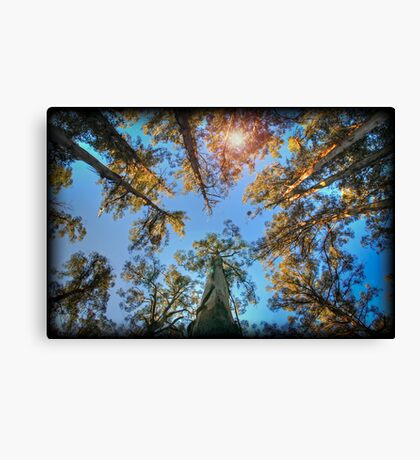 Looking up at the top end of the forest Canvas Print