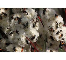 Busy Bugs Photographic Print
