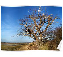 Old Gnarled Tree of Prominence Poster