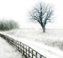 Snow flurries  by Jenifer Wallis