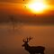 Stag sunrise 2 by Richard Bowler