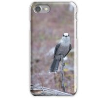 Gray Jay saying Hey iPhone Case/Skin