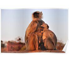 Monkey Momma Poster