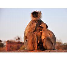 Monkey Momma Photographic Print
