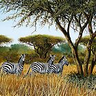 African Zebras at a game park by Mutan