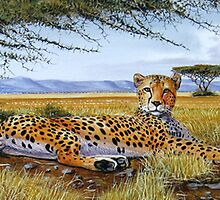 African Cheetah relaxed by Mutan