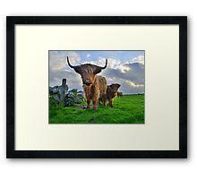 Cornwall: Heiland Coo's on the Cornish Coast Framed Print
