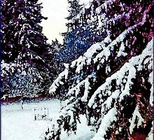 Winter Wonder by MissDawnM