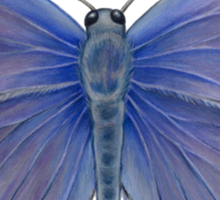Karner Blue Butterfly Sticker