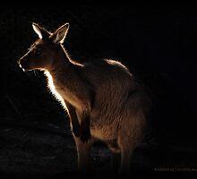 Roo by Karen E Camilleri
