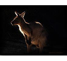 Roo Photographic Print