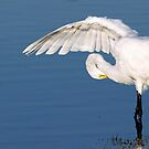 Great Egret by kathy s gillentine